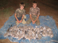 texas dove hunting